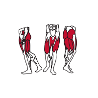 Muscles Targeted are the Gluteous, Hamstrings and Quadriceps Muscles