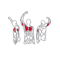 Muscles Targeted are the Lower Chest, Pectoral and Tricep Muscles